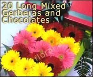 20 Mixed Gerberas with Chocolates
