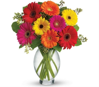Gerbera Assortment